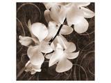 Sepia Orchid I Prints by Christine Zalewski