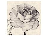 Ranunculus IV Print by Christine Zalewski