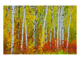 Autumn in Riding Mountain Prints by Mike Grandmaison