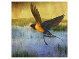 Barnswallow Kunstdruck von Chris Vest