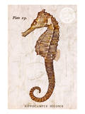 Vintage Seahorse, Hippocampus Hilonis, Sea Horse Poster by Christine Zalewski