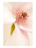 Blooming I Poster by Christine Zalewski