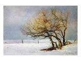 Fox and Winter Oak Poster von Chris Vest
