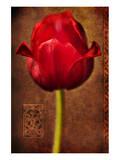 Vintage Red Tulip I Posters by Christine Zalewski