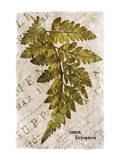 Vintage Fern: Genus Dryopteris, Wood Fern Prints by Christine Zalewski