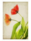 Garden Tulips Posters by Judy Stalus