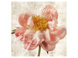 Antique Peony I Prints by Christine Zalewski