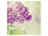 Lilac Reflection Posters by Judy Stalus