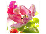 Parrot Tulip Print by Judy Stalus