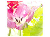 Pink Parrot Tulip Prints by Judy Stalus