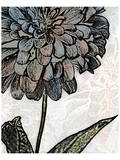 Ink Zinnia I Prints by Christine Zalewski