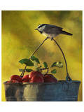 Chickadee Apples Affiches par Chris Vest