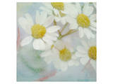 White Daisy II Art by Judy Stalus