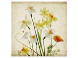 Spring Garden I Prints by Judy Stalus