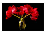 Red Tulips in a Glass Vase Poster by Christine Zalewski
