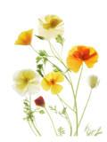 California Poppy Garden II Posters by Judy Stalus