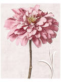 Pink Zinnia I Art by Christine Zalewski