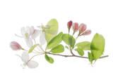 Fleurs de pommier Affiches par Judy Stalus