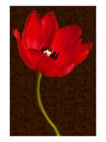 Red Tulip III Art by Christine Zalewski