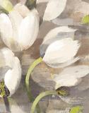 Tulip Delight II Prints by Albena Hristova