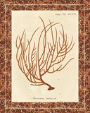 Gorgonia Miniacea Marble Prints by Apple Wild