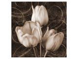 Sepia Tulip II Posters by Christine Zalewski
