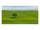 Tuscan Field Posters par Richard Desmarais