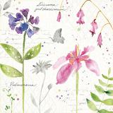 Soft Nature IV Lámina por Anne Tavoletti