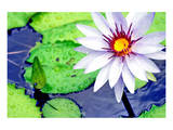 Water Lilly II Posters by Jan Michael Ringlever