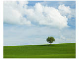 Tuscan Field Tree Poster by Richard Desmarais