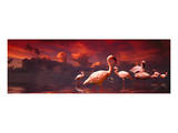Flamingo Sunset Prints by Richard Desmarais