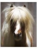Shetland Pony Prints by Melanie Snowhite
