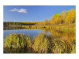 Pond in Autumn Poster by Mike Grandmaison
