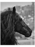 Semental negro Pósters por Melanie Snowhite