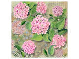 Pink Hydrangea II Prints by Roberta Collier Morales
