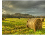 Bales of Hay Poster by Richard Desmarais