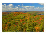 Aerial of Mixed Woods in Autumn Posters by Mike Grandmaison