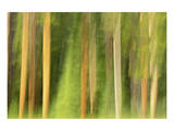 Lodgepole Pine Abstraction Posters by Mike Grandmaison