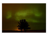 Northern Lights and Oak Tree Print by Mike Grandmaison