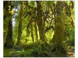 Hoh Rain Forest IV Art by Richard Desmarais