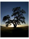 La Palouse Steptoe Tree Silhouette Print by Richard Desmarais