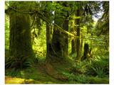 Hoh Rain Forest II Posters by Richard Desmarais