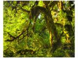 Hoh Rain Forest I Affiche par Richard Desmarais