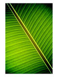 Tropical Shade Poster by Doug Nelson