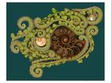 Ferns Spirals Shells I Art