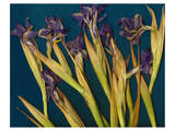 Teal Garden Irises Prints