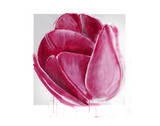 Vivacious Tulip Bloom Posters by Miranda York