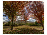 Diablo Vista Park Autum Posters by Michael Polk