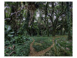 Maui Honolua Bay Forest Prints by Michael Polk