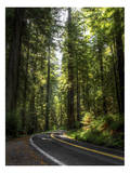 Avenue of the Giants 2 Prints by Michael Polk